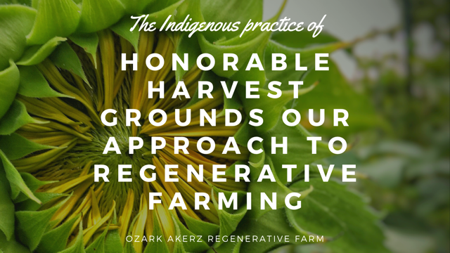 A sunflower with overlayed text - Honarable Harvest grounds our approach to regenerative farming