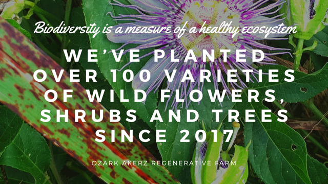 A passion flower overlayed with the text - we've planted over 100 varieties of wild flowers, shrubs and trees since 2017